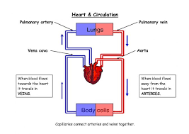 Coronary Circulation Flow Chart Awesome Changes In Coronary