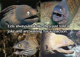 Image - 234807] | Bad Joke Eel | Know Your Meme via Relatably.com
