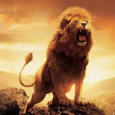 Lion Wallpaper For Android Free Stock Wallpapers On