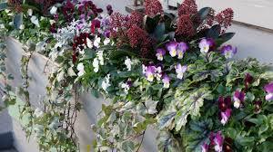 Best flowers box garden purple ideas #garden #flowers. Bright Berries And Winter Window Boxes Bring Joy To Your World