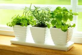 in home herb garden kit