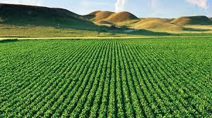 معاناة كبيرة للمزارعين في سهل الغاب بريف حماه