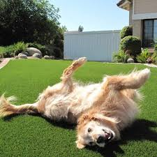 artificial grass for pets. UlimatePet For Dogs Artificial Grass Pets D
