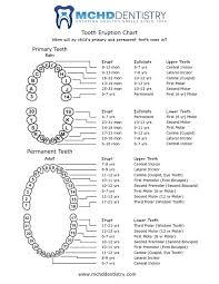 Teeth Age Chart Mchd Dentistry Morgantown Wv Monongalia County Health
