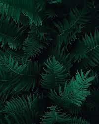 HD wallpaper: Photo of Green Fern ...