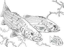 bass fish coloring pages. Fine Coloring Fish Coloring Page Fishing Bass Chasing Little  Pages Boat Colouring Pole In Bass Fish Coloring Pages E