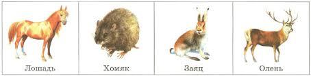 Млекопитающие звери Приспособление разнообразие органы чувств  Растительноядные лошадь хомяк заяц олень
