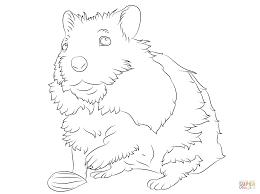 Leuke Hamster Kleurplaat Gratis Kleurplaten Printen