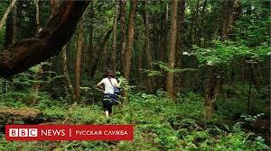Почему японцев тянет в лес самоубийств Аокигахара - BBC ...