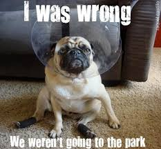 Funny Dog Quotes Delectable New Funny Dogs Quotes Part One WeNeedFun