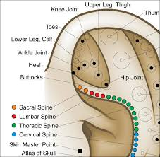 Auriculotherapy Chart Points Auriculotherapy Ear Acupuncture Poster