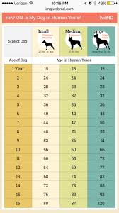 Puppy Age Chart Doggy Years Cheat Sheet Dogs Dog Age Chart Dog Ages
