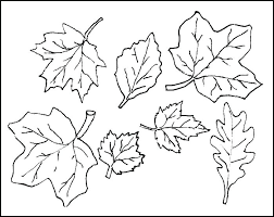 oak tree leaves coloring pages leaf page free printable marvellous template fall
