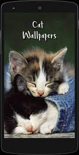 Cute Cat HD Wallpapers for Android ...