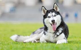 01 29 14 cute pets pics 736x459