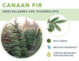Types Of Trees UsedKing Tree Handicrafts Shenzhen Co LtdTypes Of Fir Christmas Trees