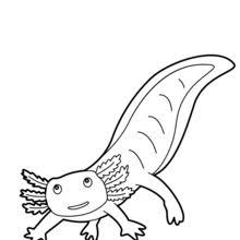 Small Picture Catfish coloring pages Hellokidscom