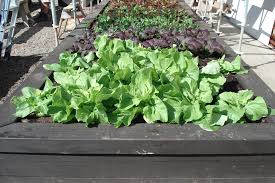 Small Picture Edible gardens Landscape design garden care services and