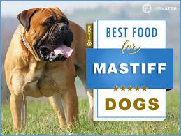 Top 6 Recommended Best Foods For A Mastiff