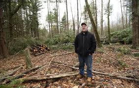 hemlock pest spreads forcing maine landowners to cut trees
