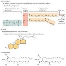 009 Jbchs Gf01 Carbon Steroids Flow Beautiful 21 Chart