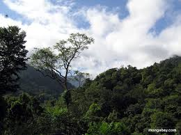 Image result for WHY SHOULD FORESTS BE SAVED?