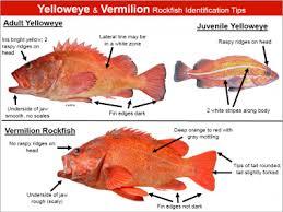 57 Valid Rockfish Chart
