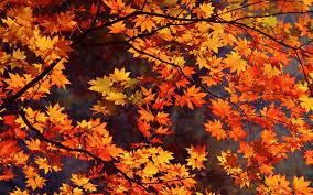 Japan Autumn wallpapers