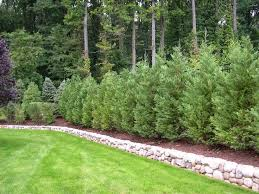 Truesdale Landscaping | Best Trees and Plants for Privacy | new home |  Pinterest | Plants, Landscaping and Yards