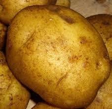 Высокоурожайные сорта картофеля ХитАгро ru Сорт картофеля Голубизна