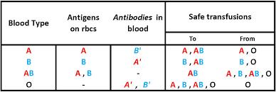 Rh Blood Group Chart Www Bedowntowndaytona Com
