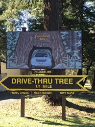 so a sight to see pit stop is useful to take advantage of to stretch the legs and get out of the car chandelier tree leggett california