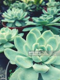 High Angle View Of Succulent Plant Growing Outdoors High-Res Stock Photo -  Getty Images