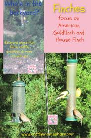 Crafty Moms Share Fun Facts About Finches With A On American Goldfinch And House Finch