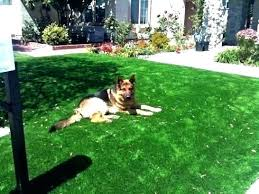 artificial grass for pets. Pet Friendly Artificial Grass Cost Fake For Dogs Turf Dog Runs In With Pets