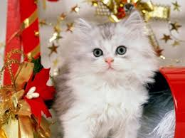 Christmas Kitten Wallpaper Cats Animals Wallpapers in jpg format ...