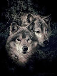 Пара волков, вышивка крестом, печатная схема на канве, размер ...