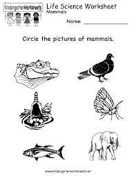 Animal Classification worksheet   Intermediate Tech Lessons together with Vertebrate Worksheets for Kids as well Animal Word Search  Mammals   Word search  Worksheets and Teaching as well Mammals Life Science Reading  prehension Worksheet moreover Animal Coverings   Worksheet   Education besides Mammals and Reptiles Cut and Paste Worksheet also Reptiles   hibians  Birds  Mammals  Fish Teaching Resources together with English teaching worksheets  Mammals likewise 150 best Lesson Plans  Mammal Unit images on Pinterest   Kids further Mammals of the Grand Canyon Word Search Puzzle besides Sizes  big and small activity worksheet for preschool children. on mammal worksheets kindergarten