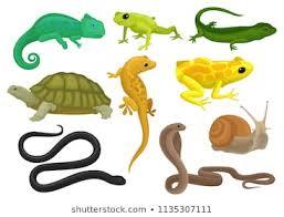 Invertebrados Images Stock Photos Vectors Shutterstock