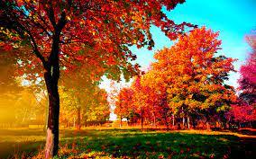 Top fall trees desktop wallpaper HQ ...