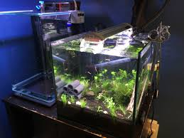 office fish tanks. Here Is My 12\ Office Fish Tanks