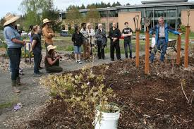 the learning garden produced 3 500 pounds of food for rock creek and sylvania campus food services