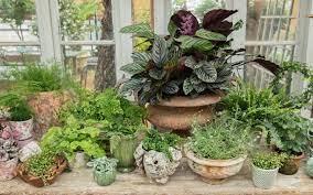 summer pots and planters petersham