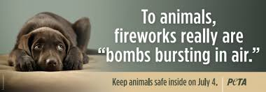 Image result for 4th of july cat images