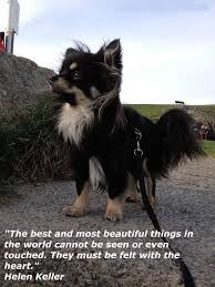 Beautiful Animal Quotes