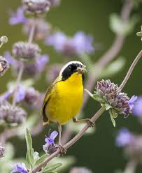 Blog Articles | Page 10 | Tree Care for Birds