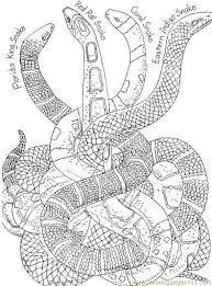 Small Picture Differents shapes snake Coloring Page Free Snake Coloring Pages