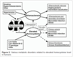homocysteine the hidden factor and cardiovascular disease cause  biochemistry analytical biochemistry metabolic disorders homocysteine