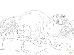 North American River Otter Coloring Page Free Printable Coloring Pages