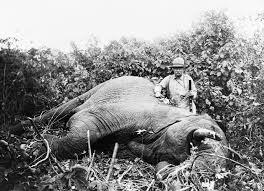 file roosevelt safari elephant jpg  file roosevelt safari elephant jpg